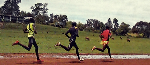 Are Humans Natural Distance Runners