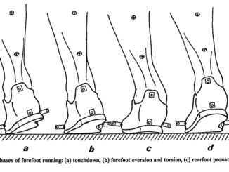 Pronation in Forefoot Strike Running