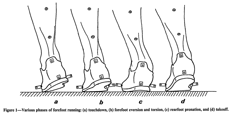 Forefoot Running May Fix Foot Overpronation
