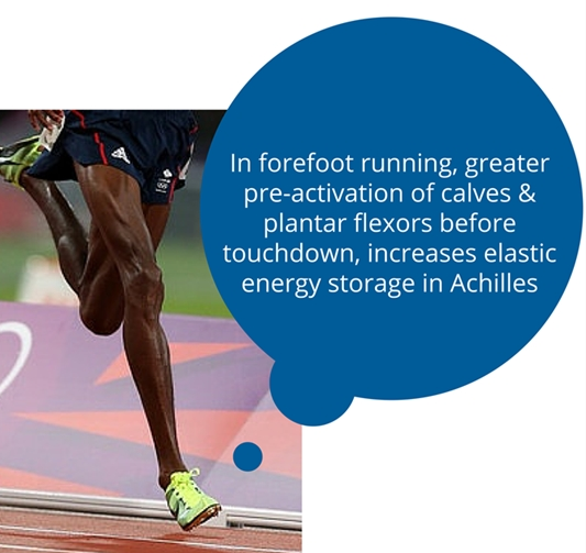 Lower Leg Muscles Operate More Efficient in Forefoot Running