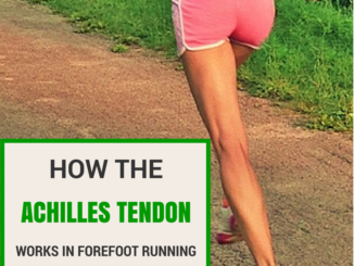 How the Achilles Tendon Works in Forefoot Running